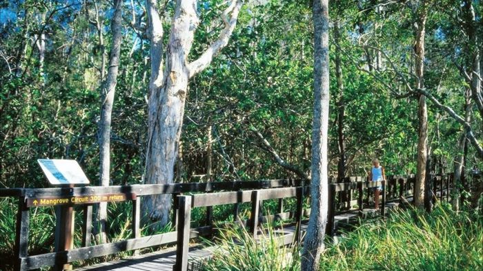 Kinaba Track - Tourism Cairns