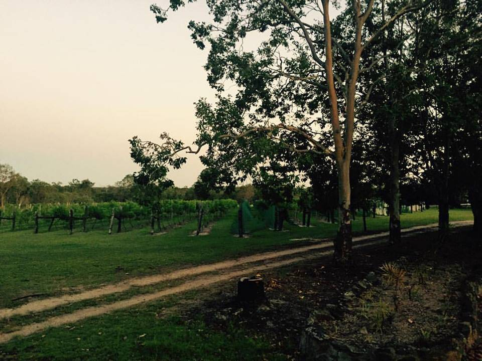 Brierley Wines - Tourism Cairns