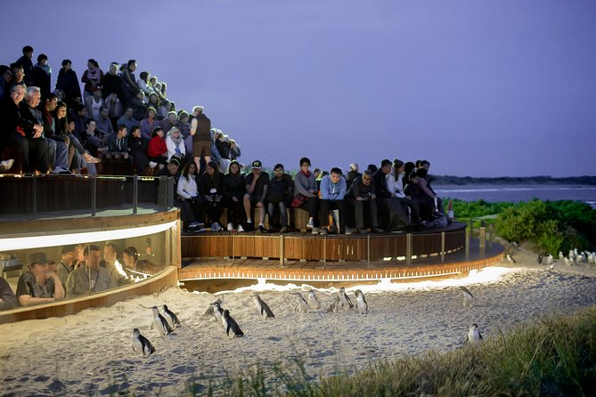1 Day Private Phillip Island Tour VIP Charter up to 9 People - Tourism Cairns