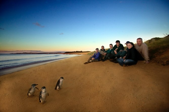 Phillip Island Ultimate Penguin Eco Tour or Skybox Experience - Tourism Cairns
