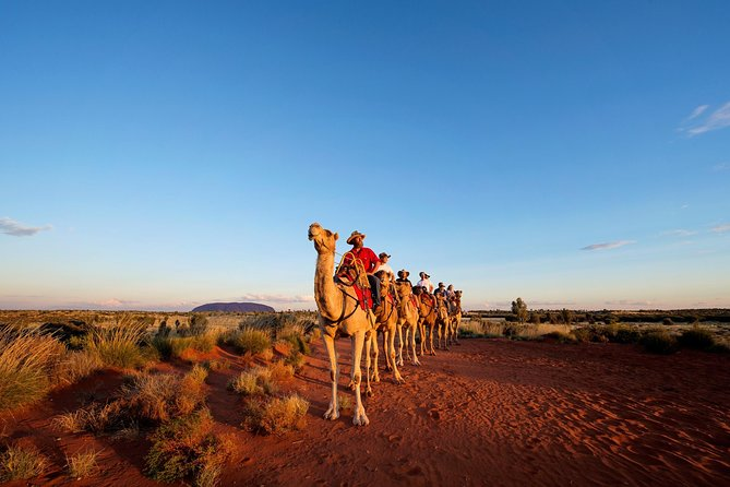 Uluru Camel Express Sunrise or Sunset Tours - Tourism Cairns