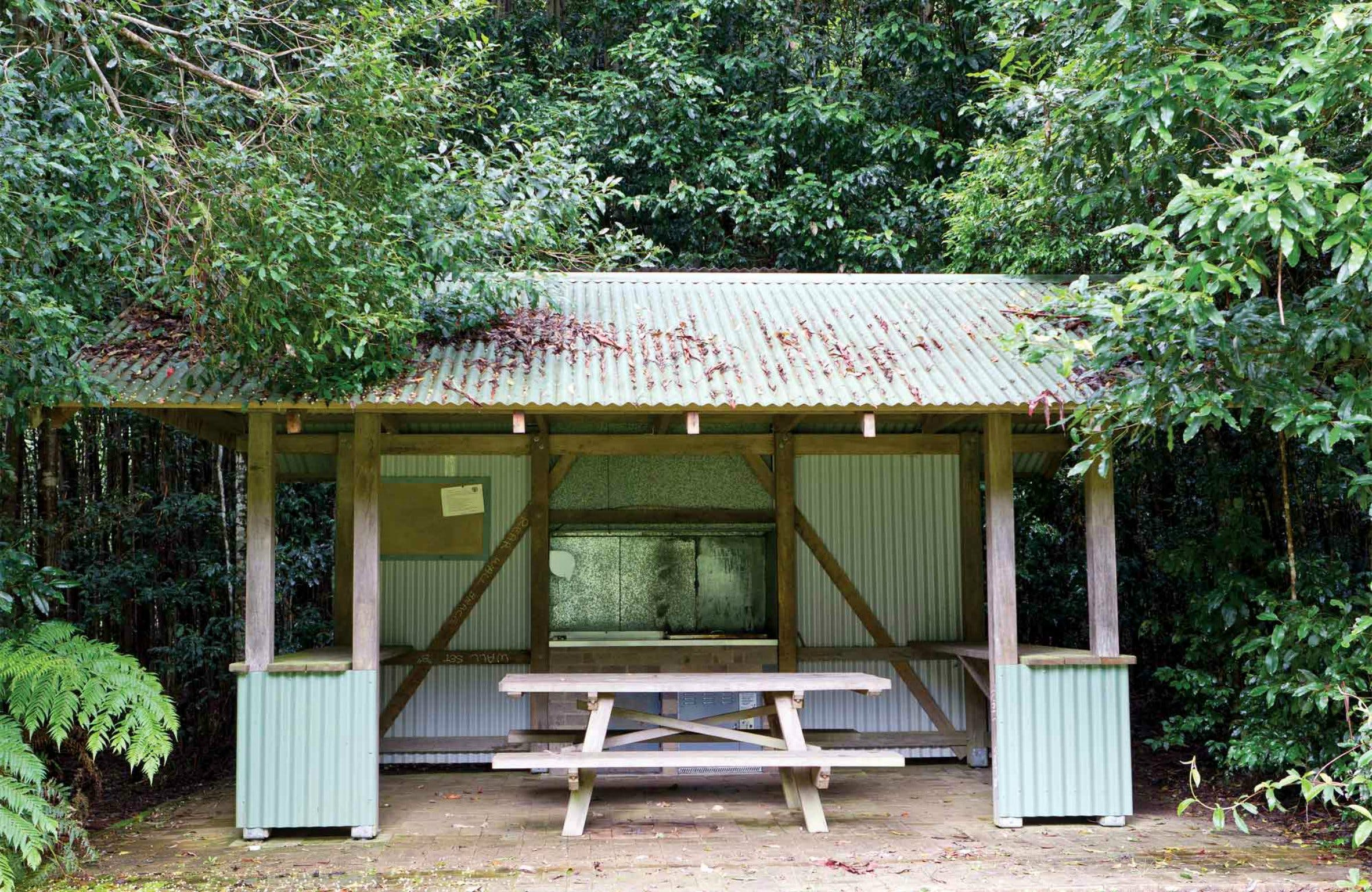 Coachwood Picnic Area - Tourism Cairns