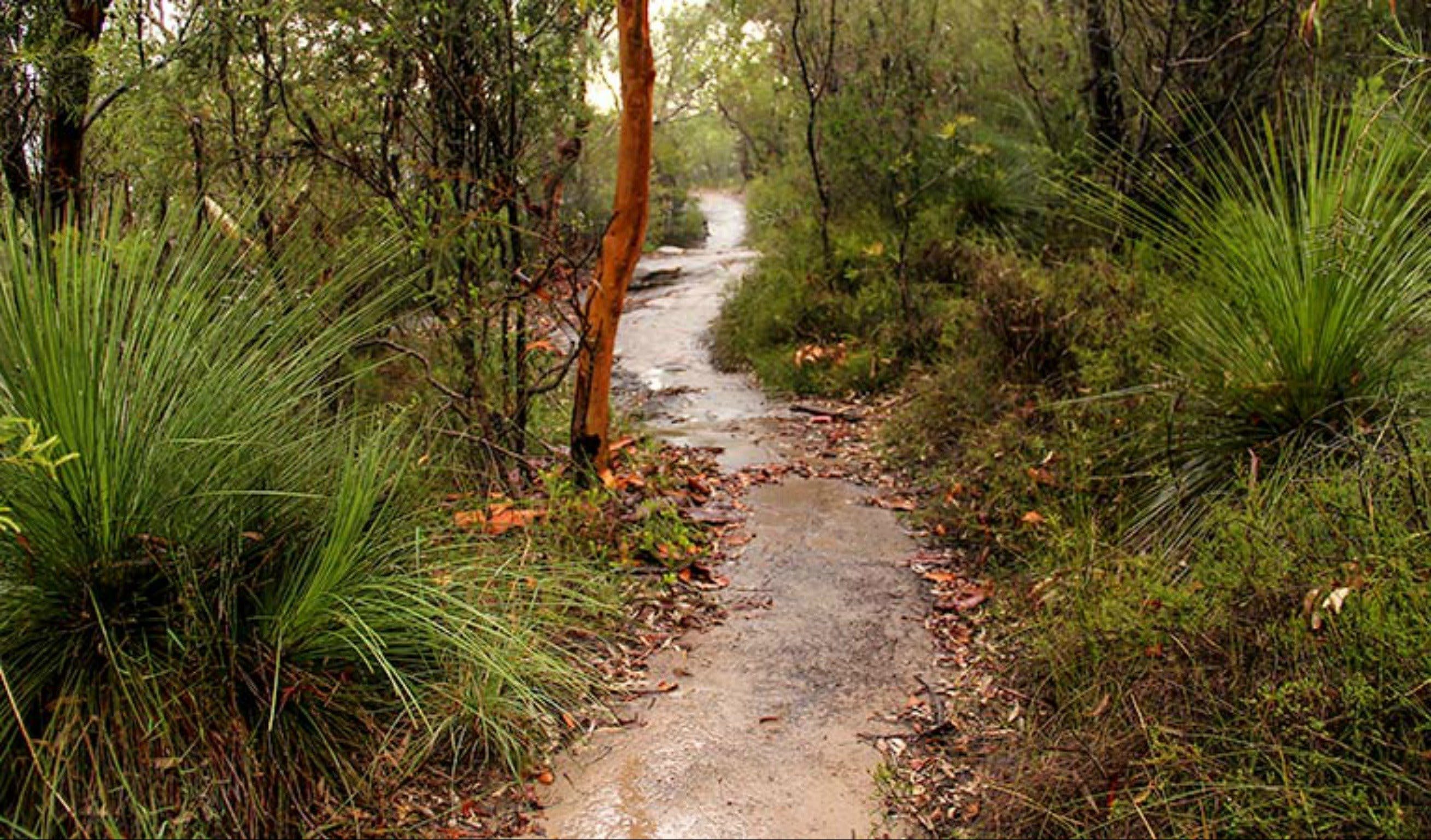 Great North walk - Brisbane Water National Park - Tourism Cairns