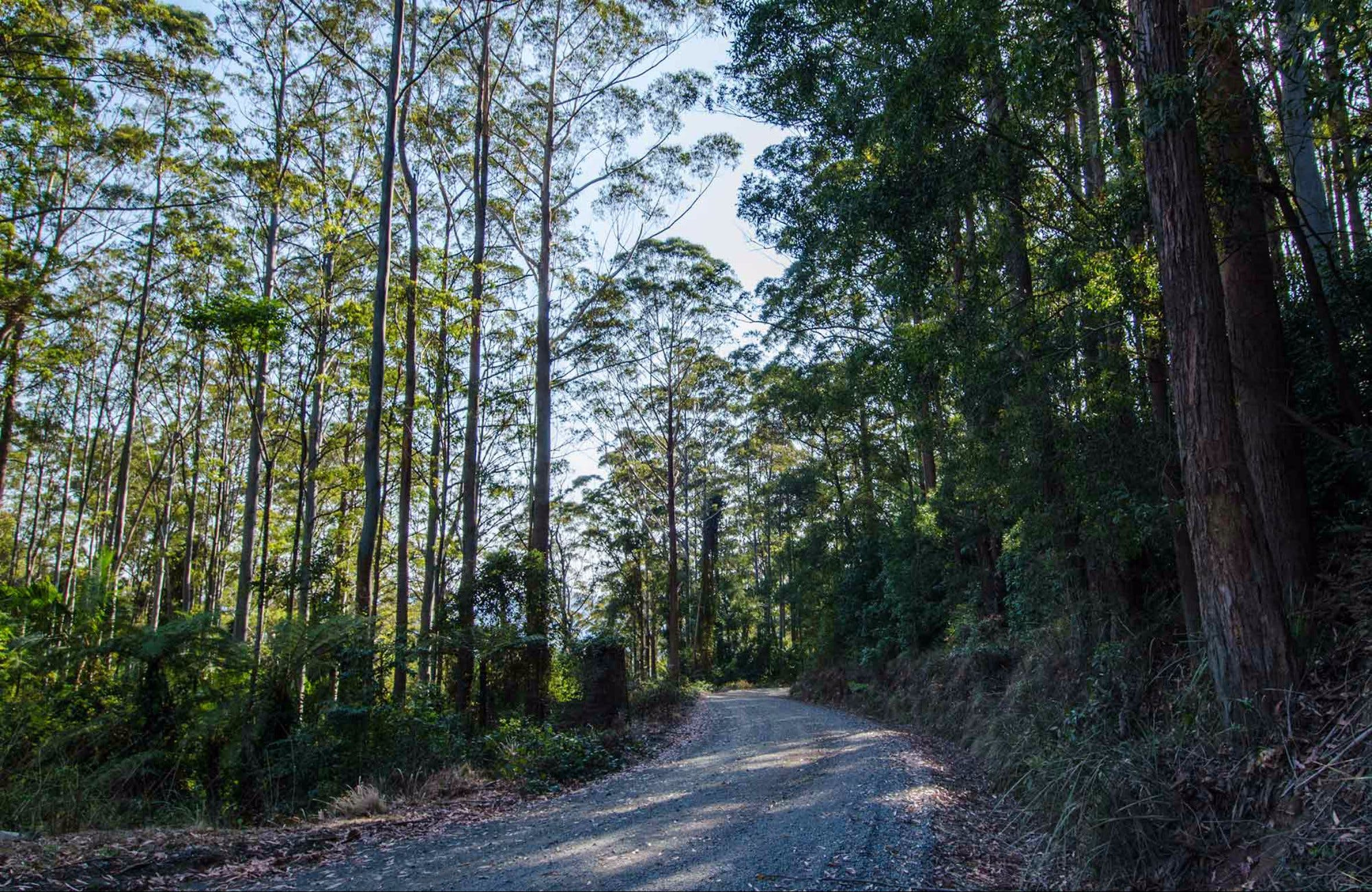 Hastings Forest Way Touring Route - Tourism Cairns