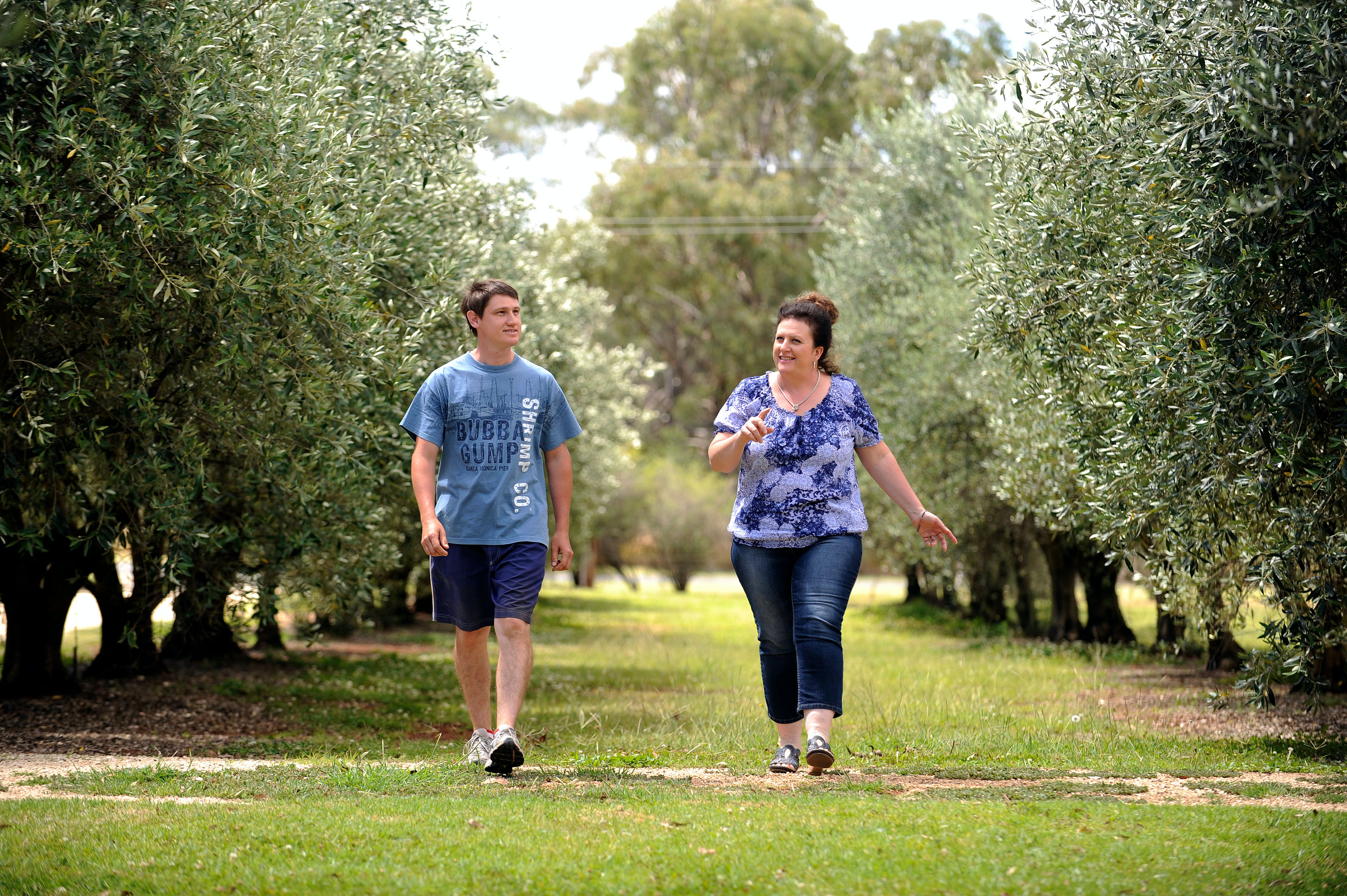 Olives of Beaulieu - Tourism Cairns