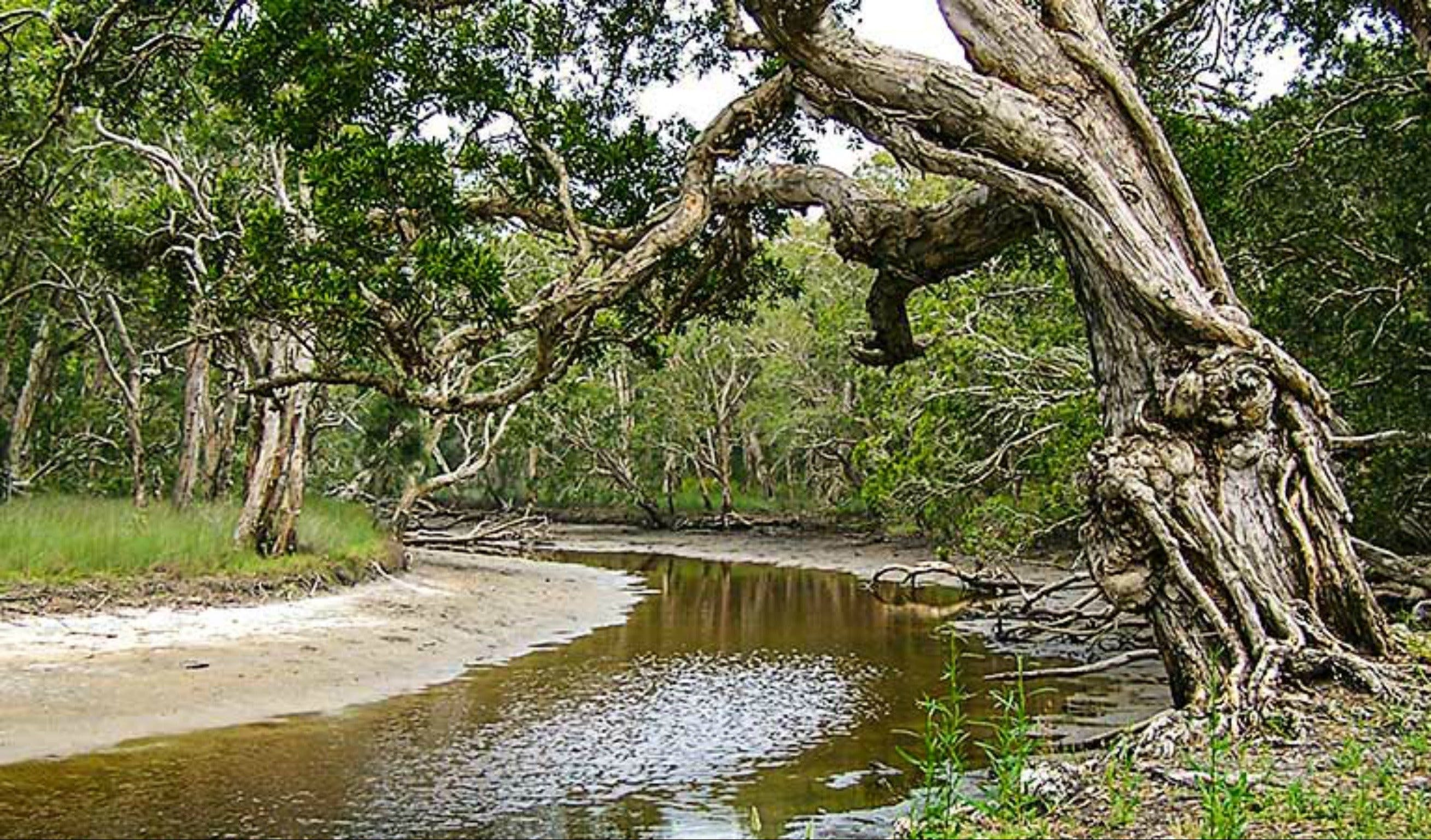 Saltwater National Park - Tourism Cairns