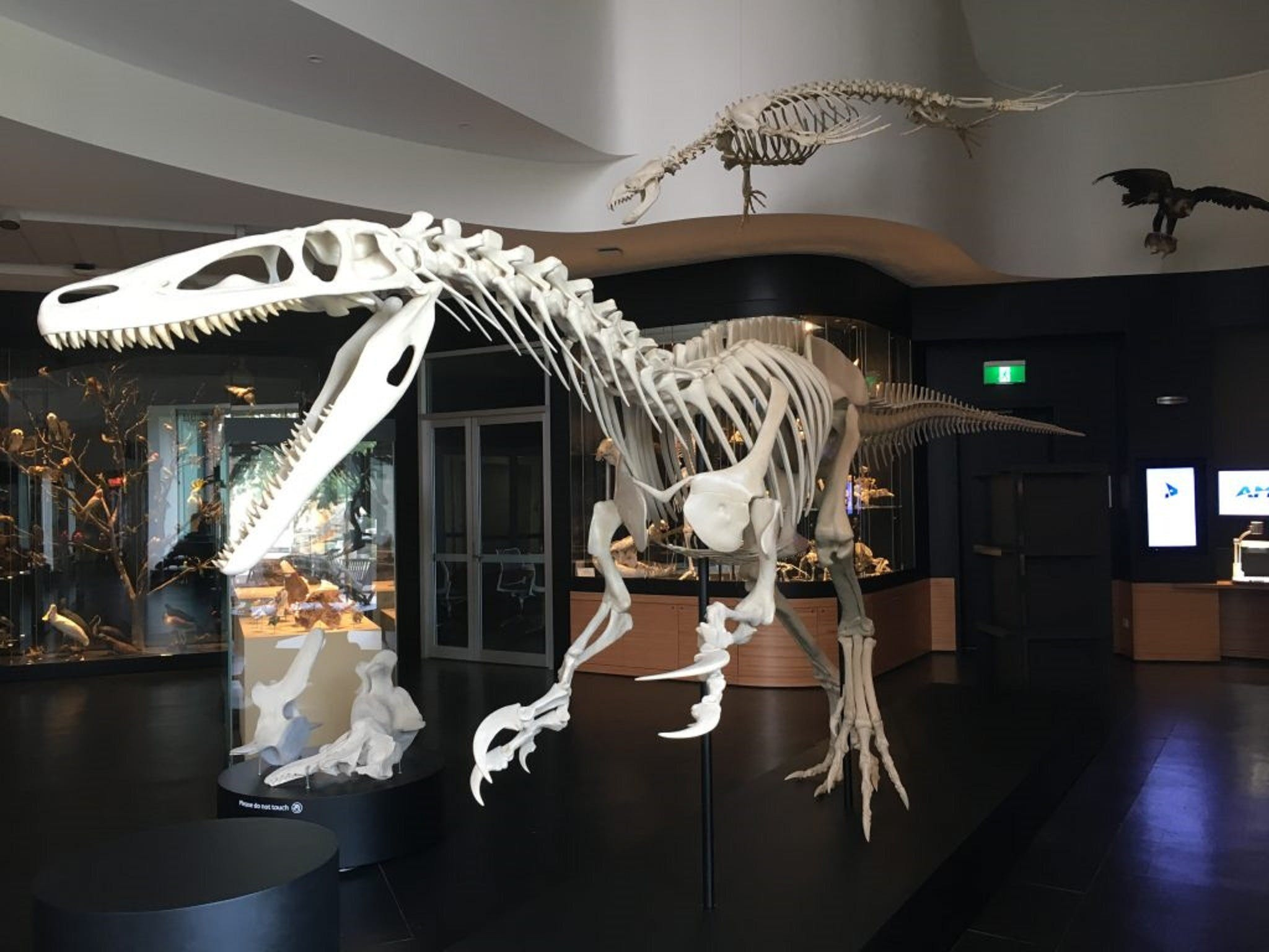UNE Natural History Museum - Tourism Cairns