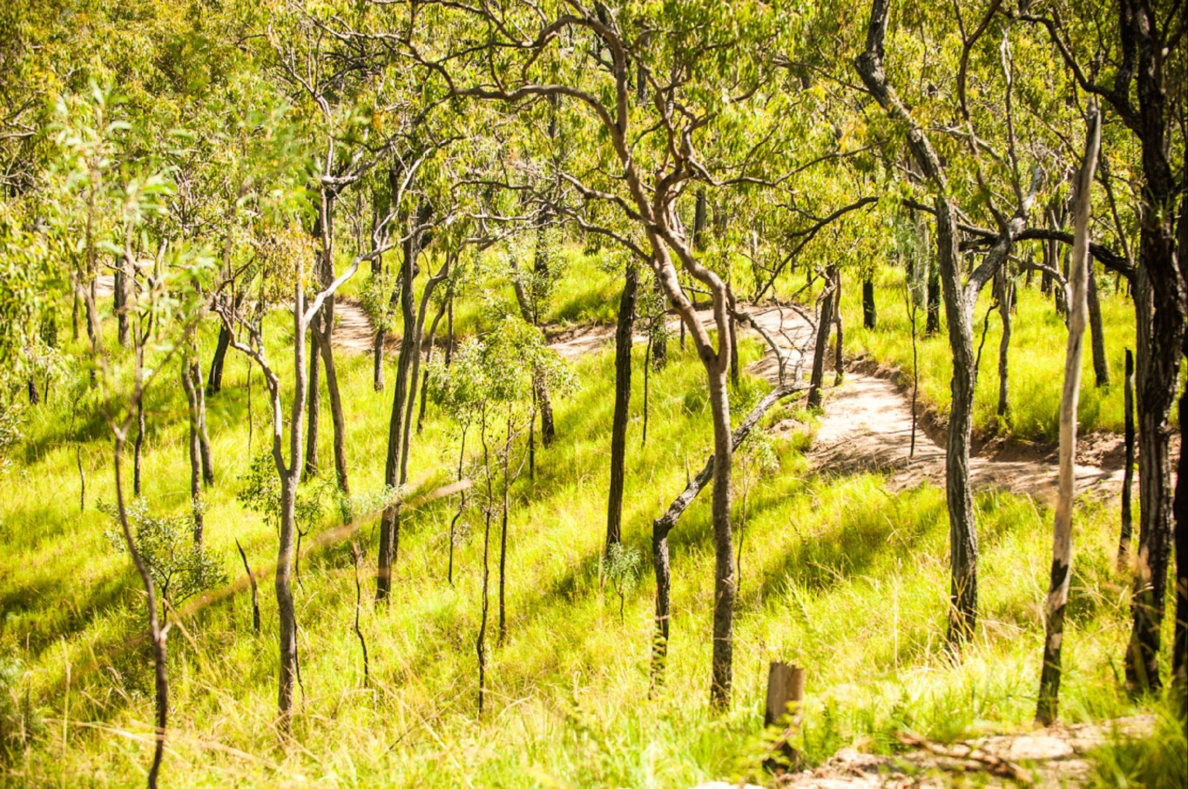 Davies Creek Mountain Bike Park - Tourism Cairns