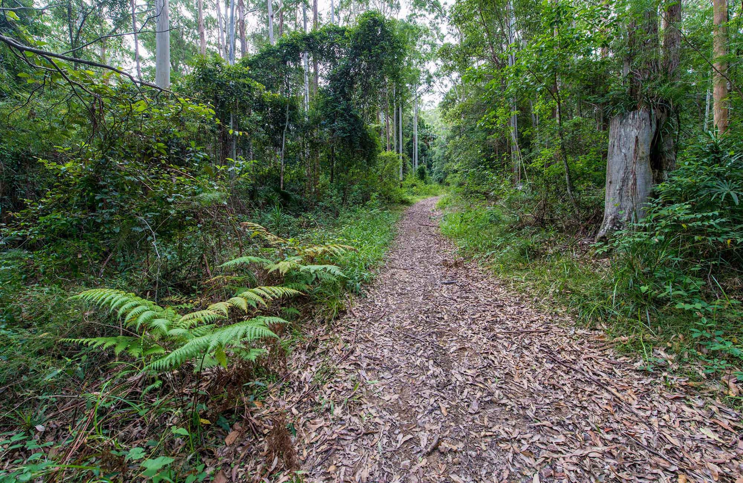 Double Wharf Trail - Tourism Cairns