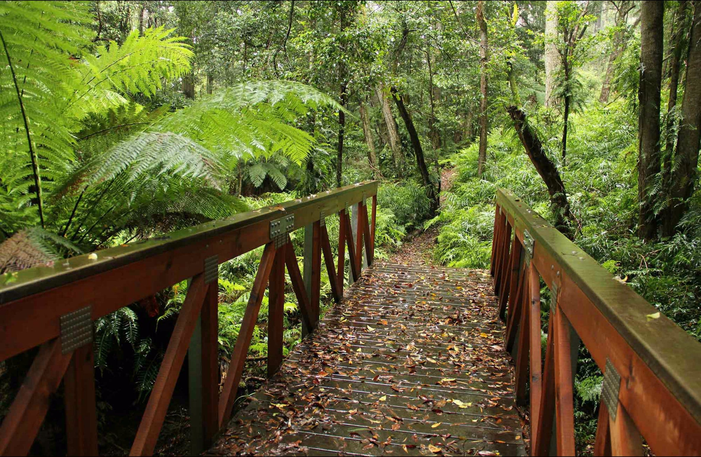 Goodenia Rainforest Walking Track - Tourism Cairns