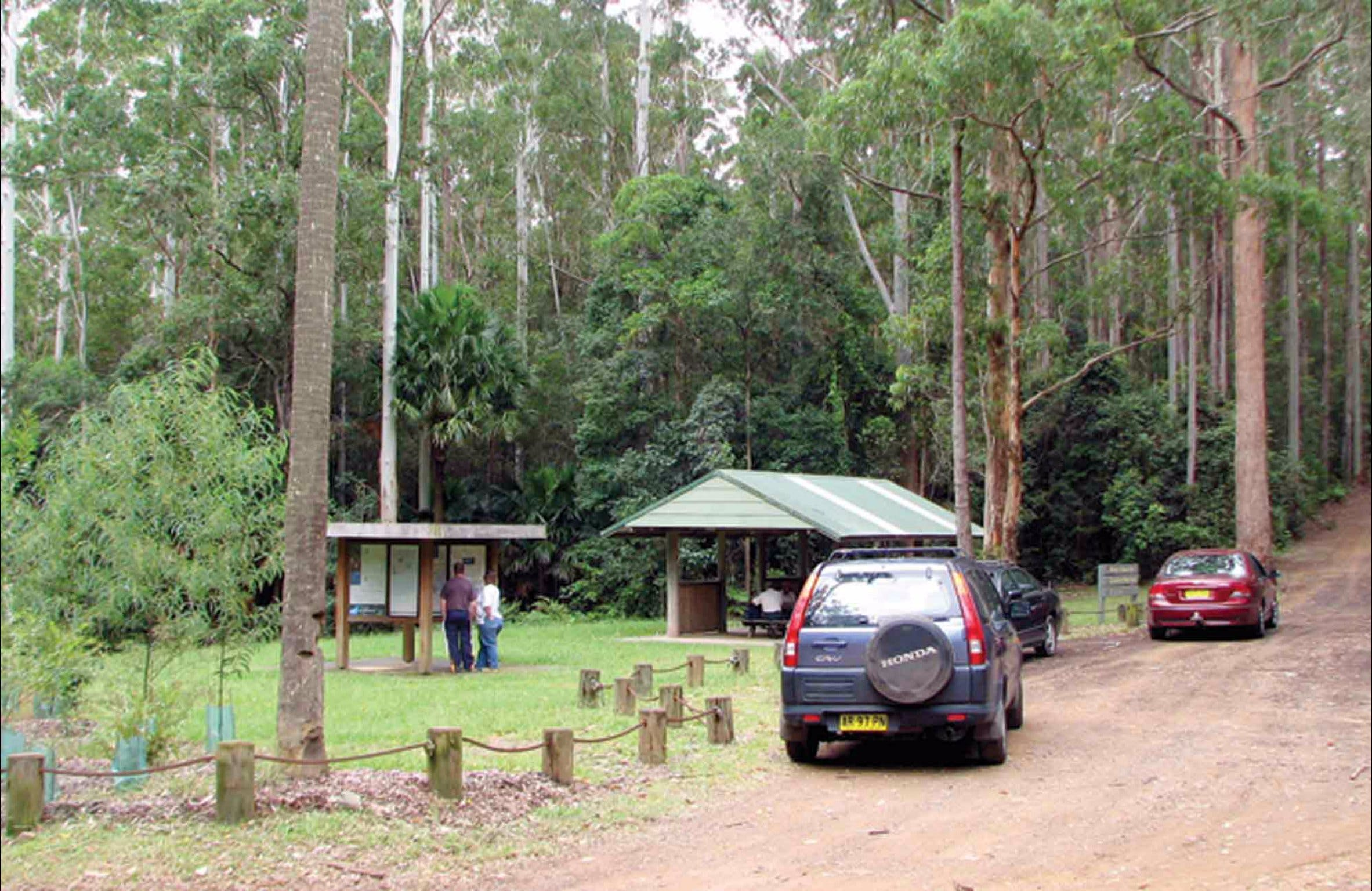 Wallingat Forest Drive - Tourism Cairns