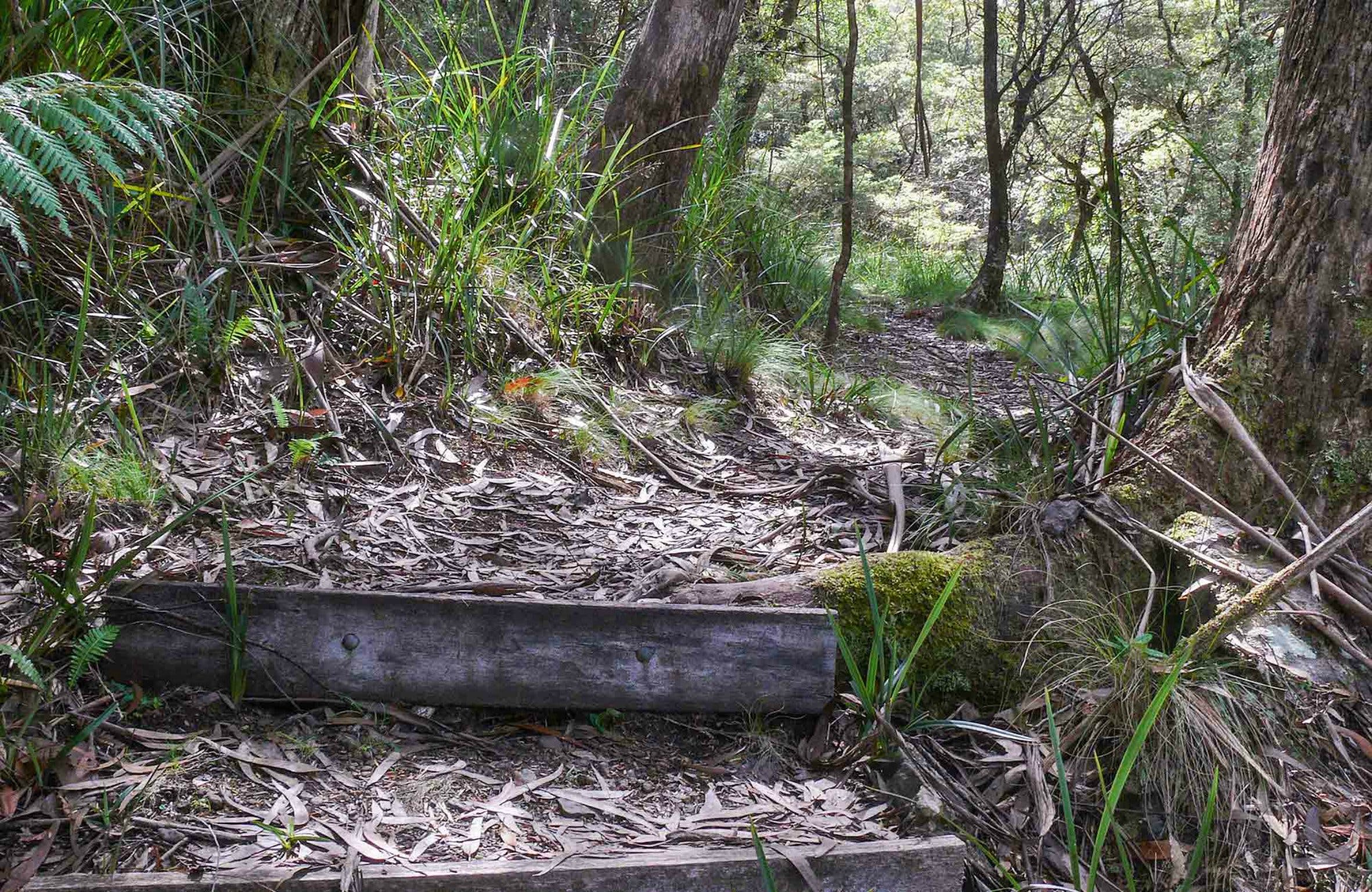Tea Tree Falls Walking Track - Tourism Cairns