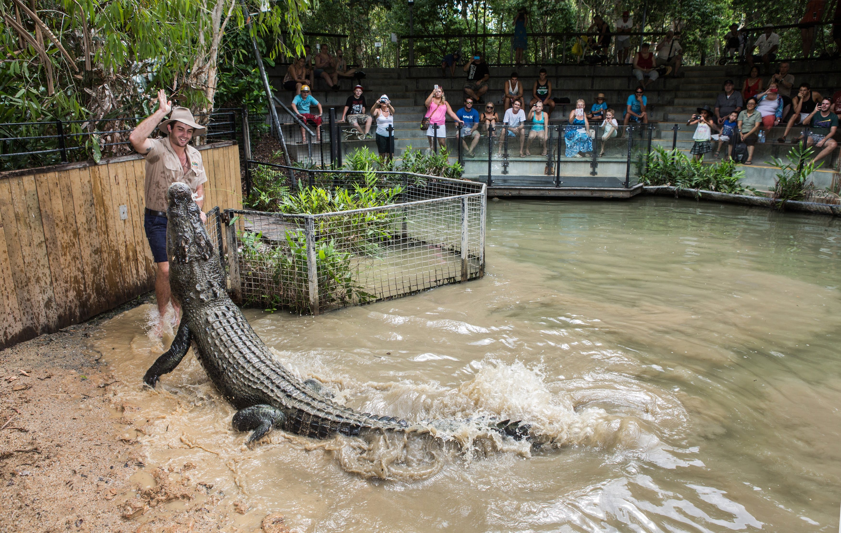 Hartley's Crocodile Adventures - Tourism Cairns