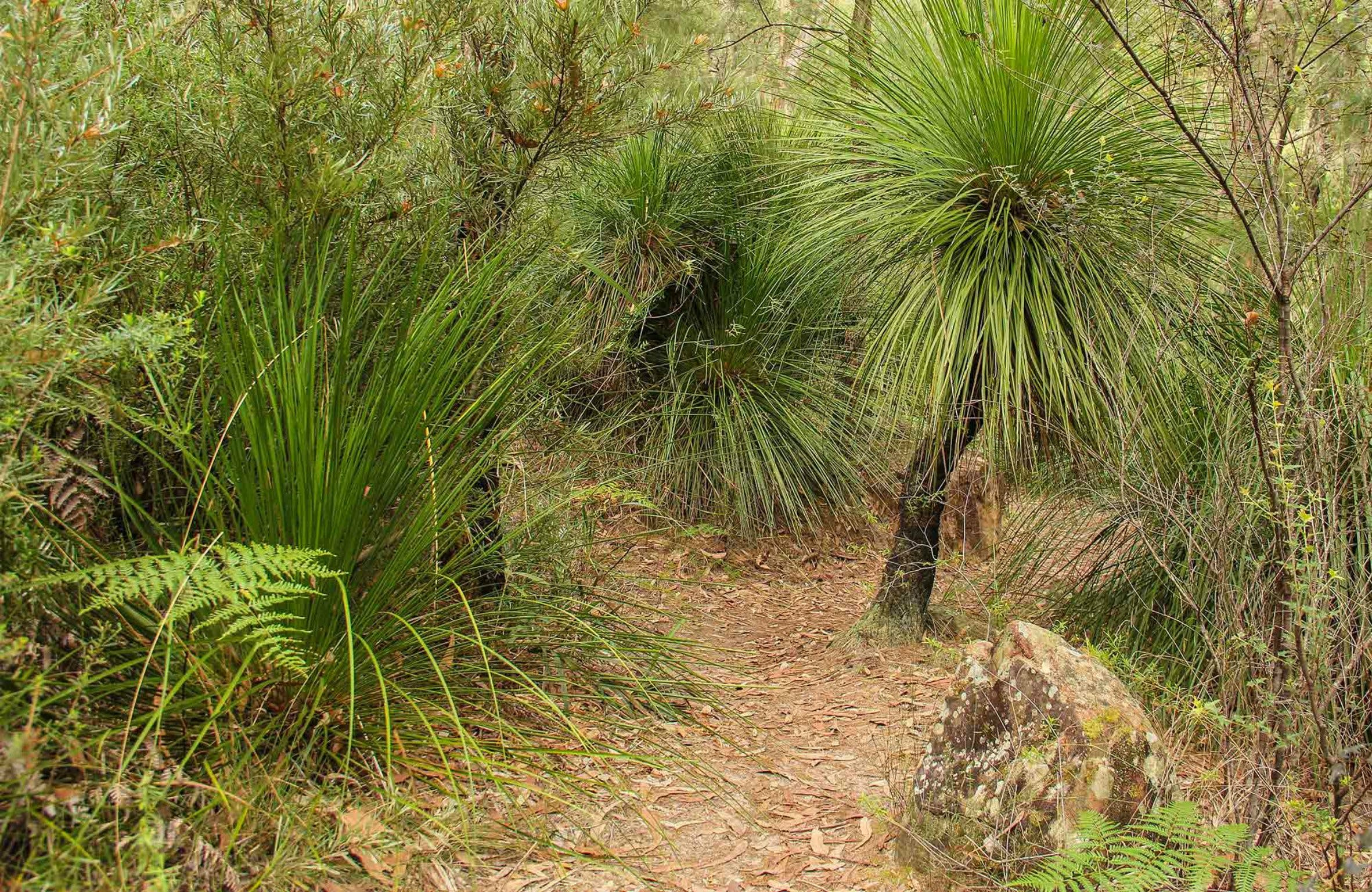 Grass Tree Circuit - Tourism Cairns