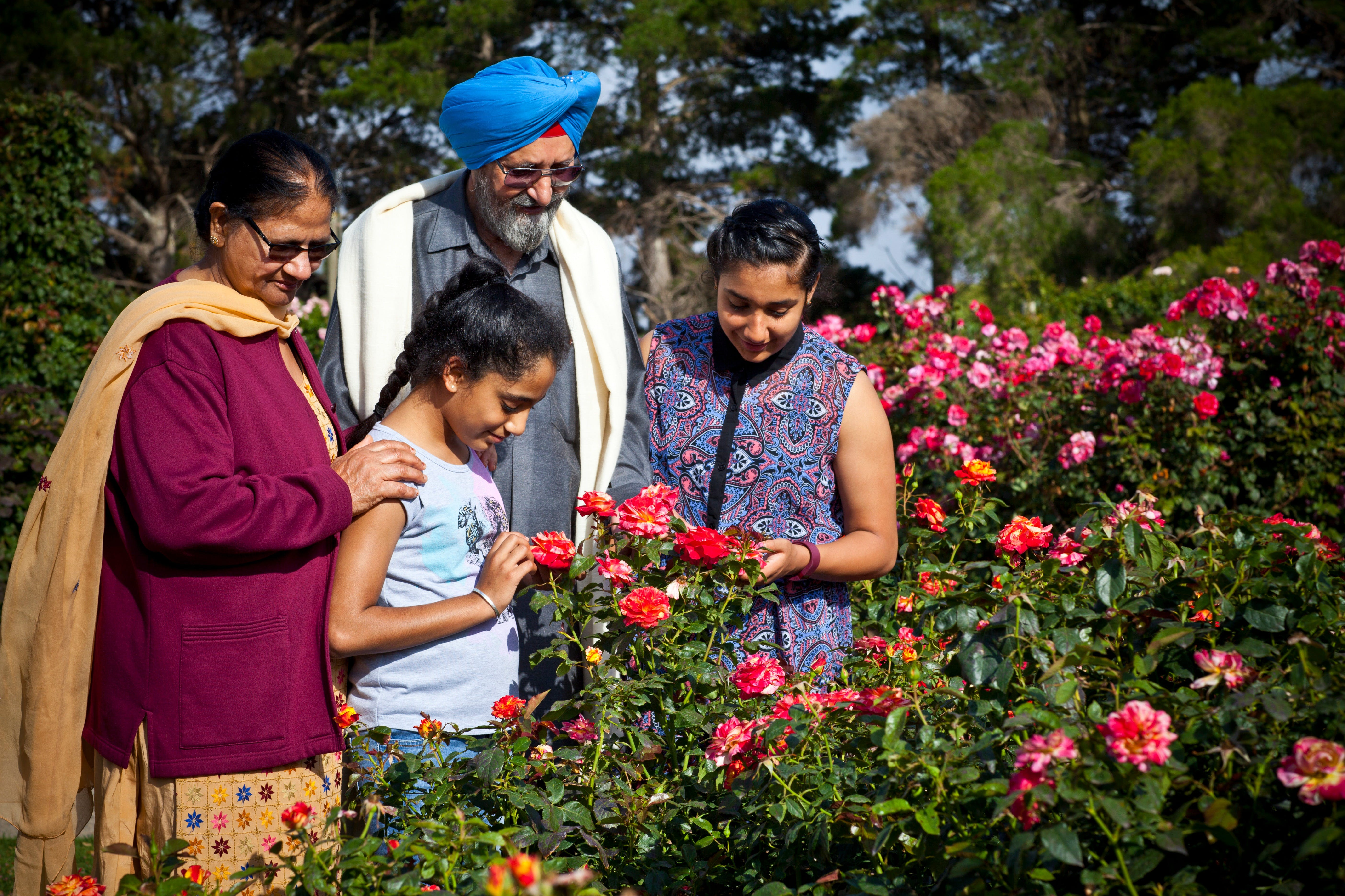 Victoria State Rose Garden at Werribee Park - Tourism Cairns
