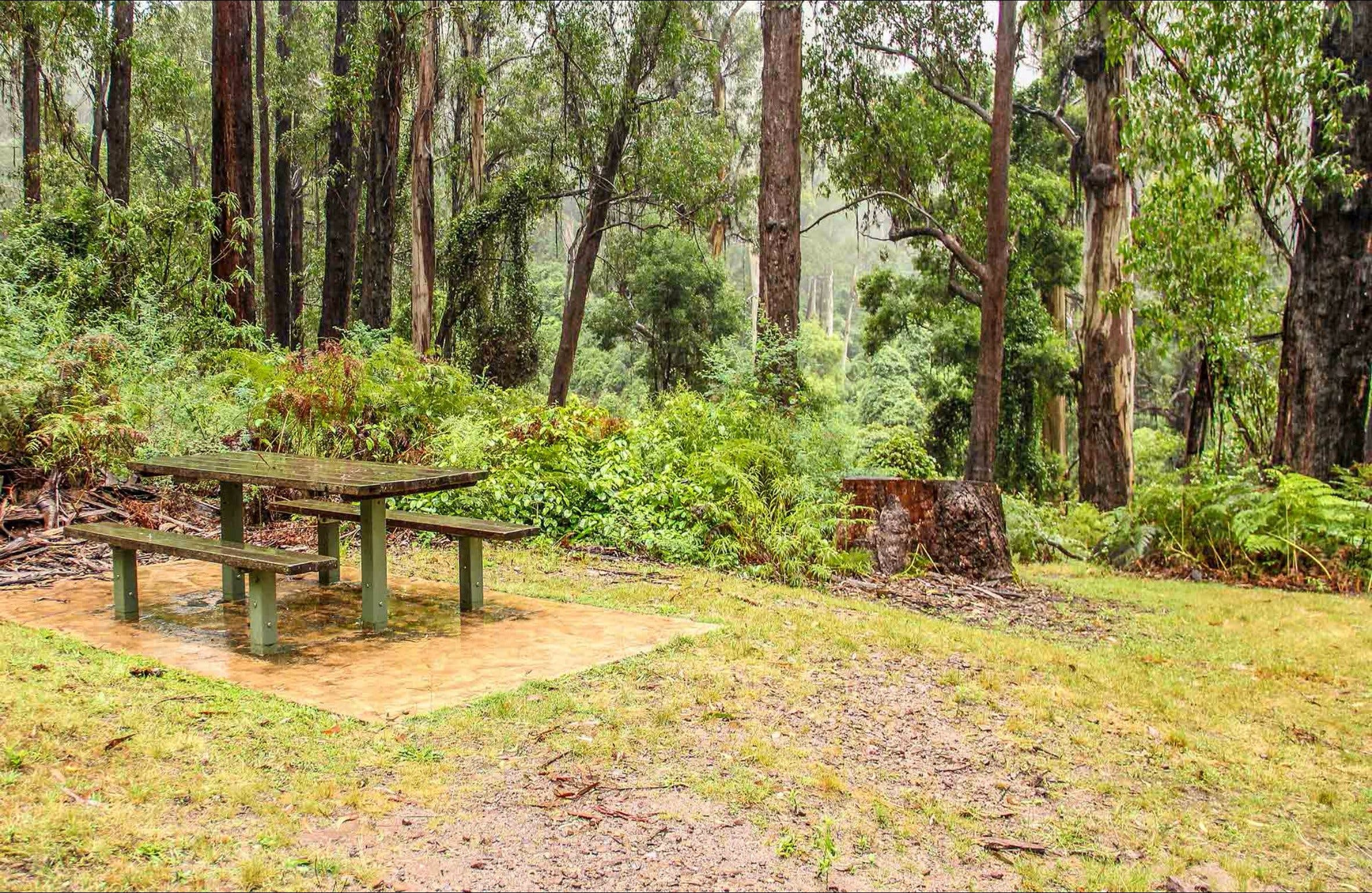 Goodenia Rainforest picnic area - Tourism Cairns