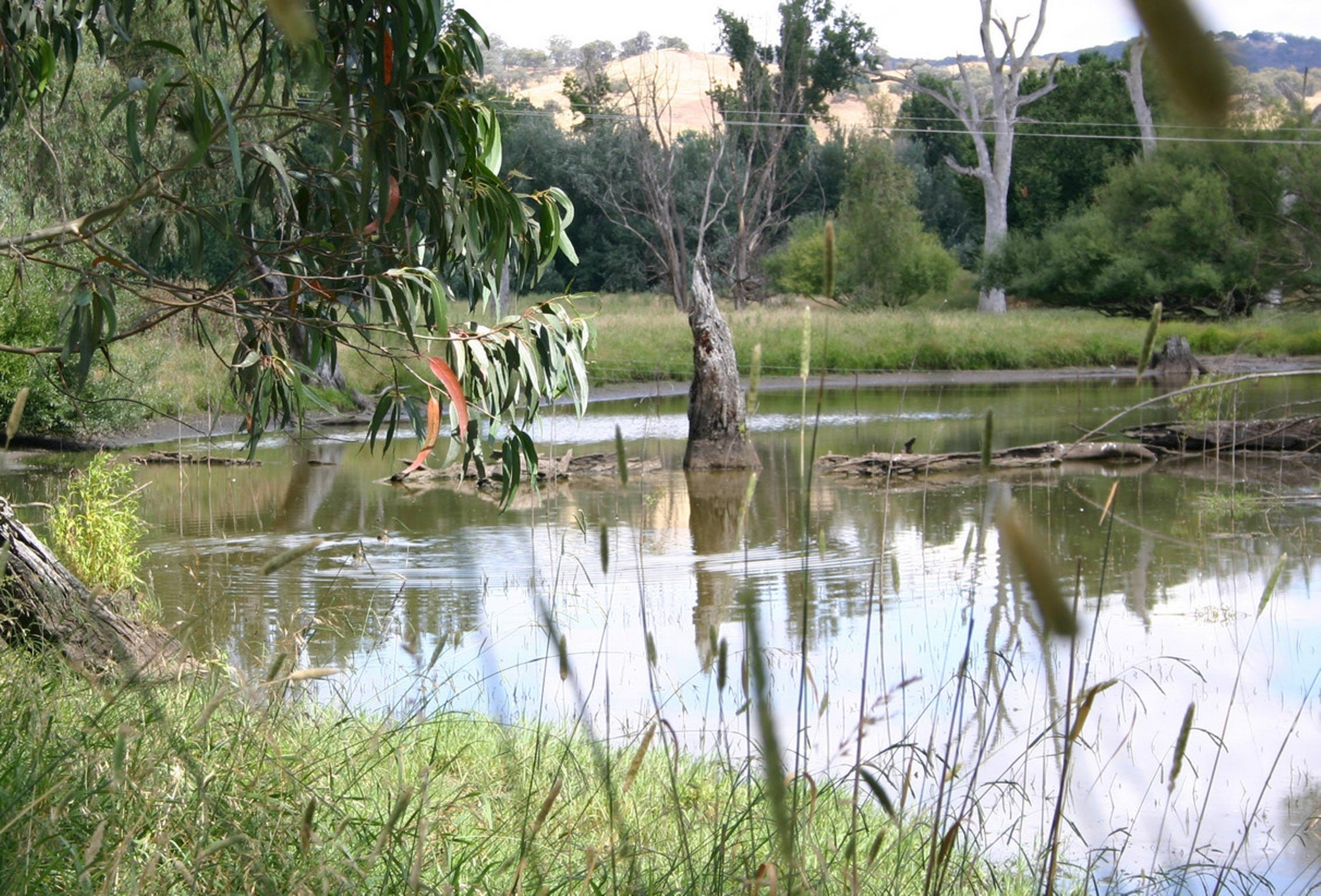 Tumut Wetlands - Tourism Cairns