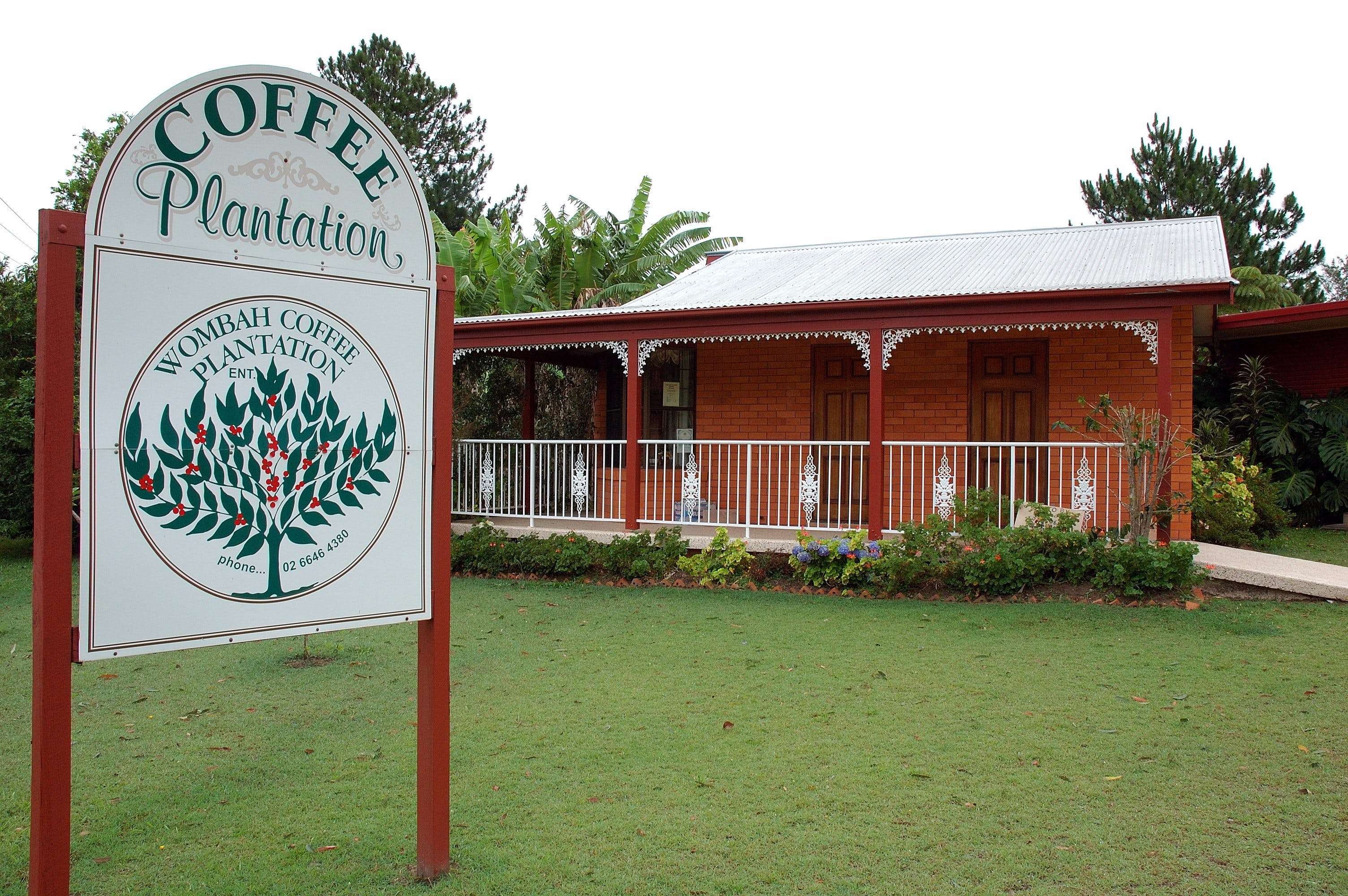 Wombah Coffee Plantation - Tourism Cairns