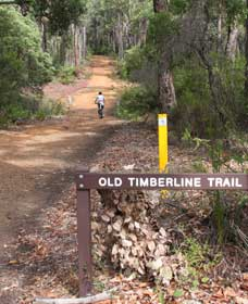Old Timberline and Sidings Rail Trails - Tourism Cairns