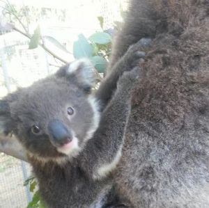West Oz Wildlife Petting Zoos - Tourism Cairns