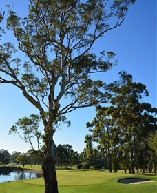 Ryde-Parramatta Golf Club - Tourism Cairns