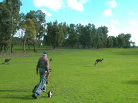 Coffin Bay Golf Club - Tourism Cairns