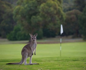 Anglesea Golf Club - Tourism Cairns