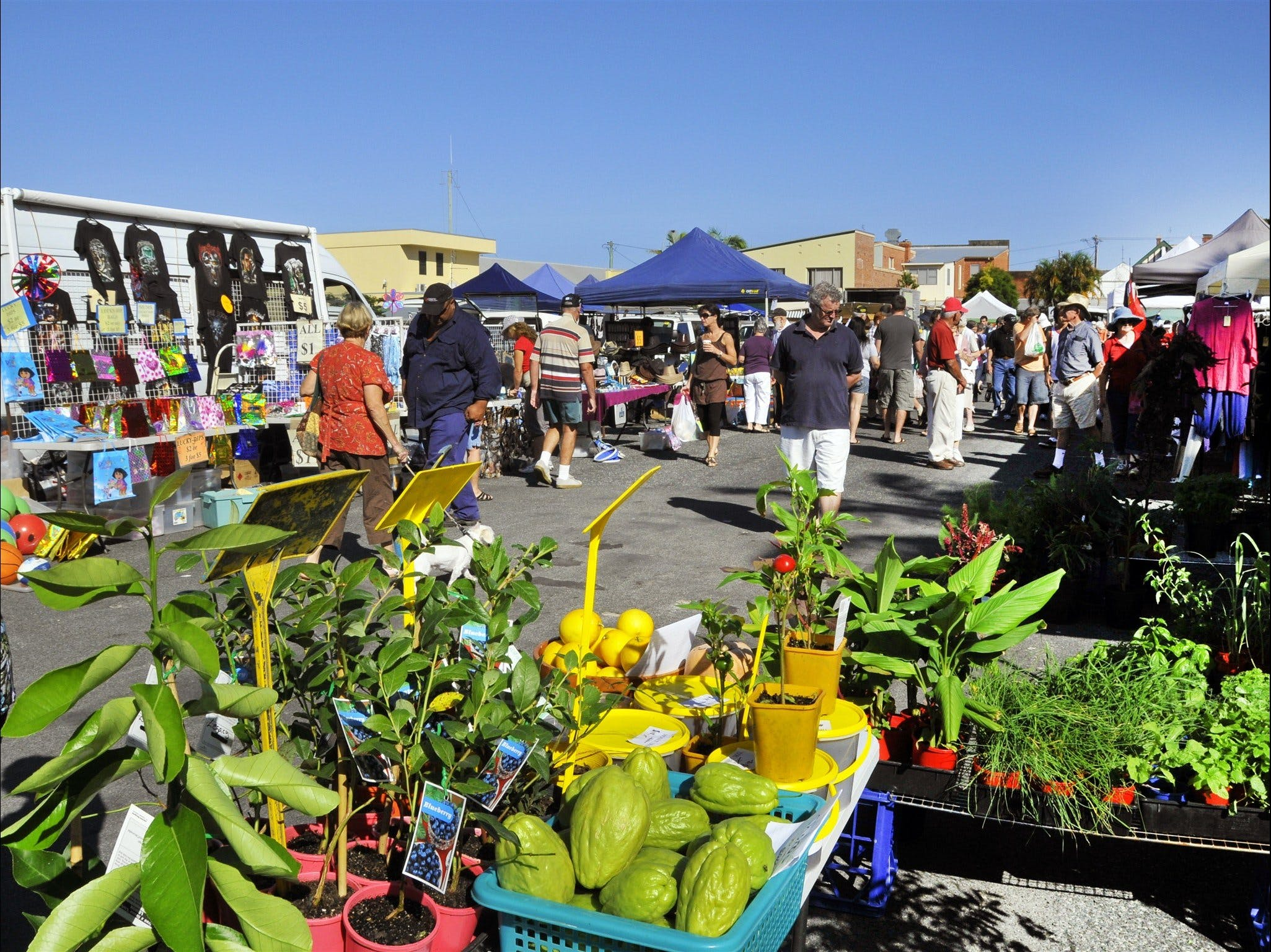 Maclean Community Monthly Markets - Tourism Cairns