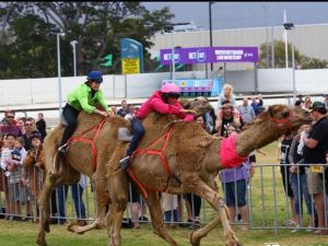 Camel Races at Gosford Showgrounds - Tourism Cairns