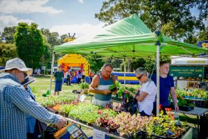 Huskisson Market - Tourism Cairns