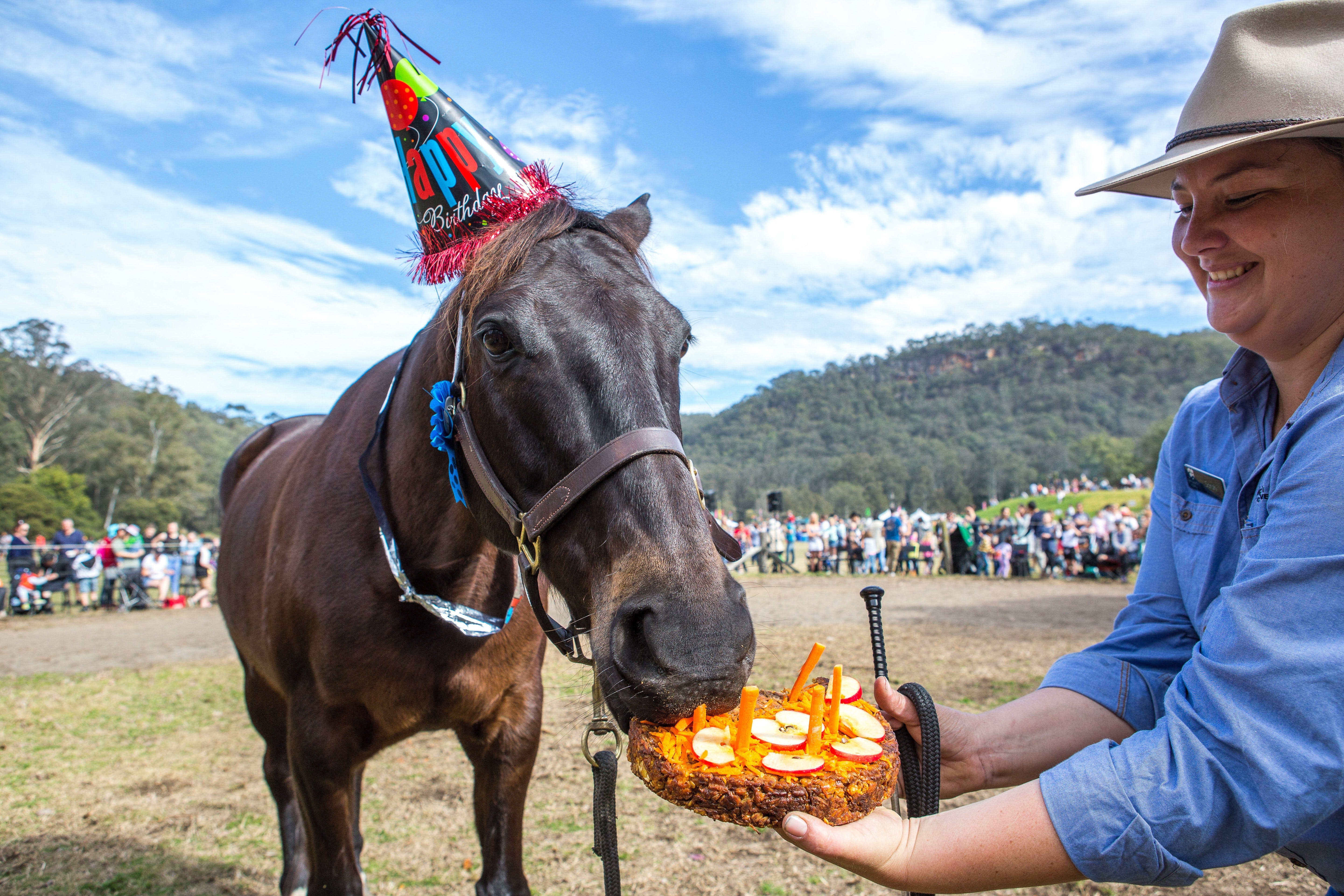Horses Birthday Festival - Tourism Cairns