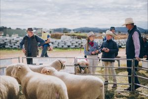Mudgee Small Farm Field Days - Tourism Cairns